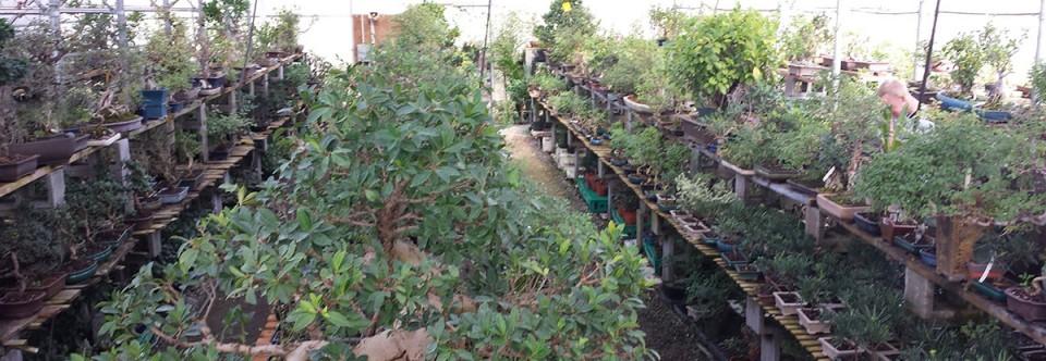 Asia Pacific Gardening, Inc