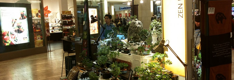 Asia Pacific Garden has Bonsai Trees at Tukwila Westfield South Center Mall