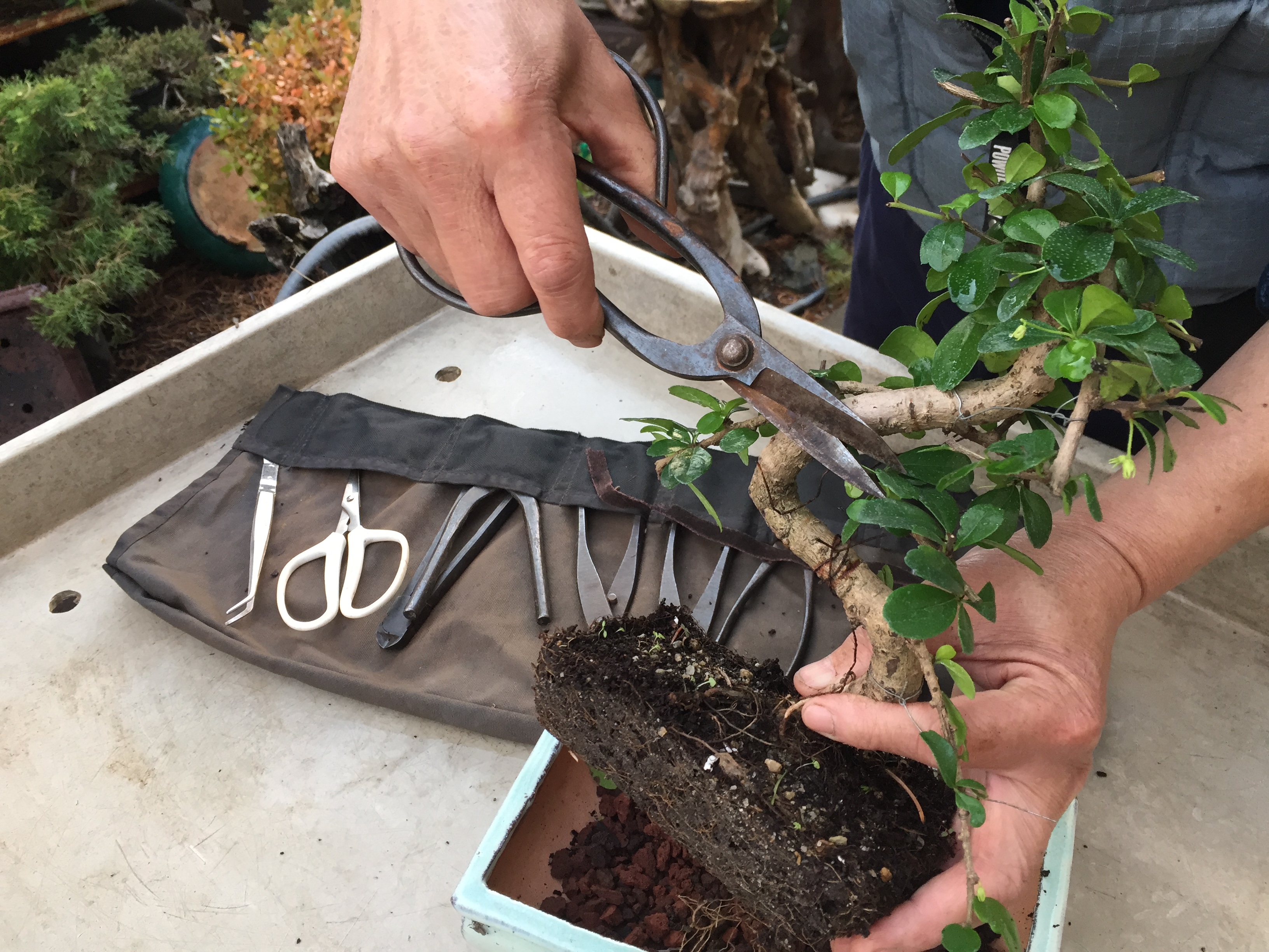 bonsai-pruning